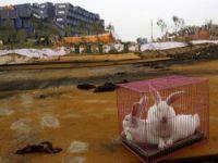 أرانب وحمام في موقع انفجار بالصين لطمأنة السكان على سلامة الهواء